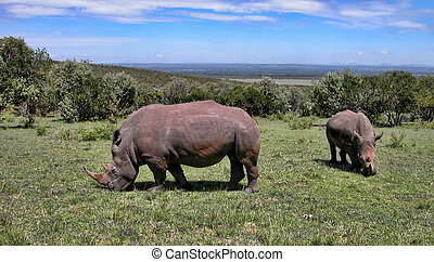 細部, の, kenya, アフリカ, の間, 春, 2005