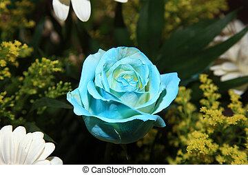 終わり, の, a, 美しい, 青, バラ
