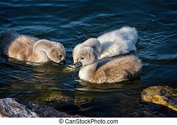終わり, 白鳥, の上, 家族