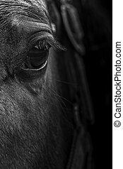 終わり, 黒, 白い馬, 目, の上