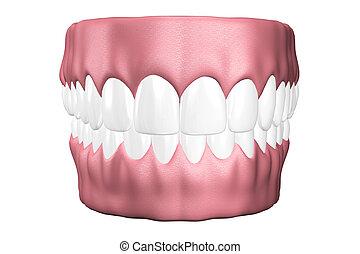 。, 終わり, 3d, 歯