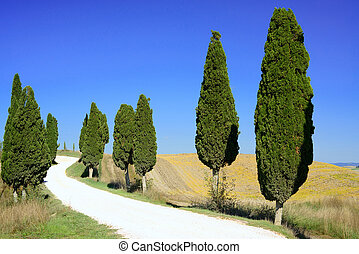 絲柏, 樹, 行, 以及, a, 白色, 路, 鄉村的地形, 在, crete, senesi, 陸地, 近, siena, tuscany, italy, europe.