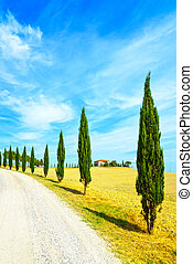 絲柏, 樹, 行, 以及, a, 白色, 路, 鄉村的地形, 在, val, d, orcia, 陸地, 近, siena, tuscany, italy, europe.
