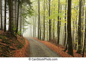 絵のよう, 森林, 秋