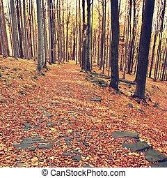 絵のよう, effect., beams., 劇的, 日当たりが良い, leaves., 黄色, 朝, scene., particolored, 暖かい, 森林, 威厳がある, 赤, よくマッチする