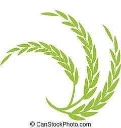 綠色的小麥