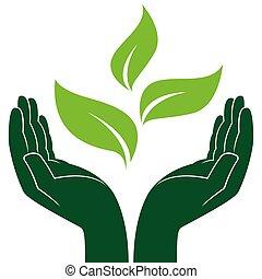 綠色的植物, 在, 人的手