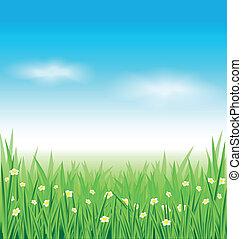 綠色的草, 以及藍色, 天空, 背景