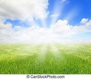 綠色的草, 由于, 藍色的天空, 以及, 陽光