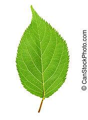綠色的葉子