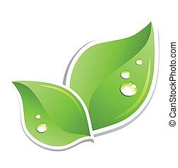 綠色的葉子, 由于, 水, droplets., 矢量