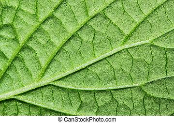 綠色的葉子, 背景, 結構, 宏