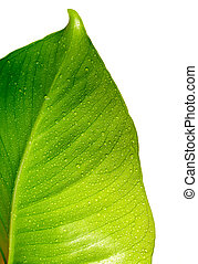 綠色, 下降, 葉子