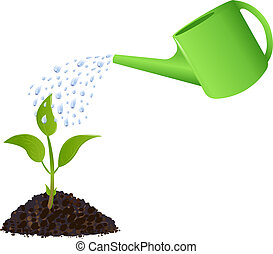 綠色, 年輕 植物, 由于, 噴壺