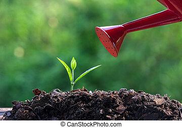 綠色, 新芽, 年輕 植物