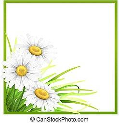 綠色, 框架, 由于, 草, 以及, 雛菊, 在, corner.
