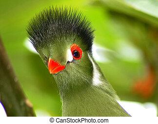 綠色, 熱帶的鳥
