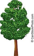 綠色, 矢量, 樹, 圖象