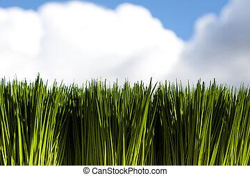 綠色, 草, 天空