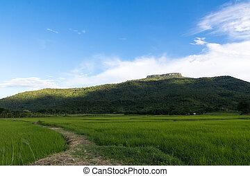 綠色, 農業, 領域