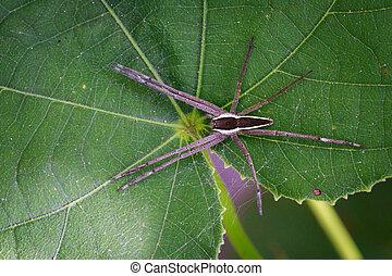 網, イメージ, 葉, くも, four-spotted, 昆虫, 託児所, 緑, 動物, (dolomedes,...