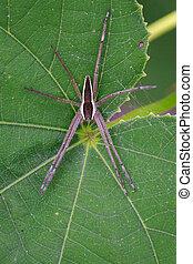 網, イメージ, leaf., くも, four-spotted, 昆虫, 託児所, 緑, 動物,...