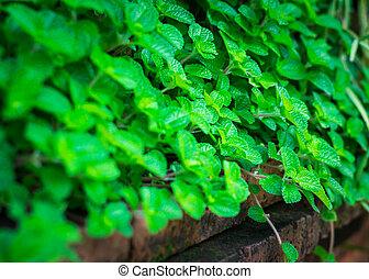 緑のプラント, 上に, 壁