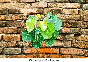 緑のプラント, 白熱, 上に, ∥, 古い, brickwall
