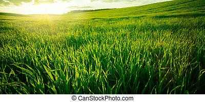 緑の採草地