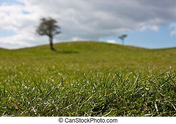 緑の採草地, 木, 2