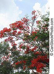 緑の木, ∥で∥, 赤, flowers.