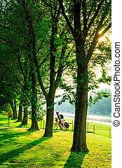 緑の木, パークに, そして, 日光
