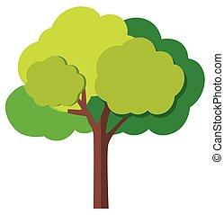 緑の木, ブランチ