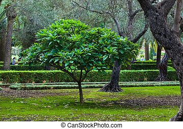 緑の木, 庭
