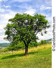 緑の木, 牧草地