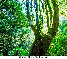 緑の森林, sunlight., 自然, 大きい, 木