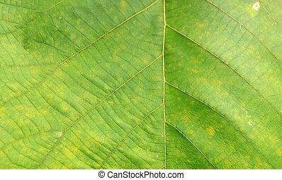 緑の概要, 葉, 背景, 手ざわり