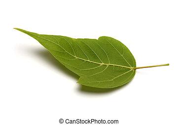 緑の白, 葉, バックグラウンド。