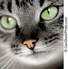 緑の目をしている, ねこ