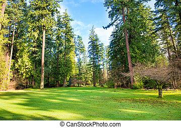 緑の芝生, 公園, 木