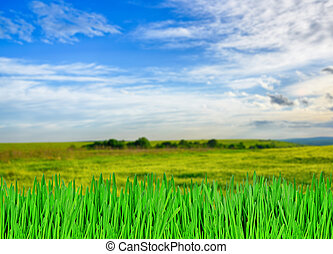 緑の草, と青, 空