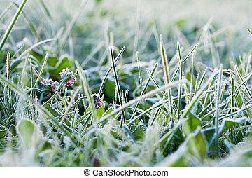 緑の草, カバーされた, ∥で∥, hoarfrost