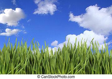 緑の草, 空, に対して, 曇り