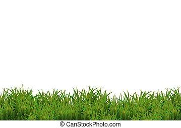 緑の草, 隔離された, 白, バックグラウンド。