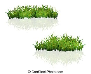 緑の草, 隔離された, 白, 背景
