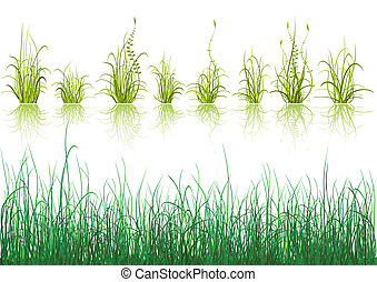 緑の草, 隔離された, 白