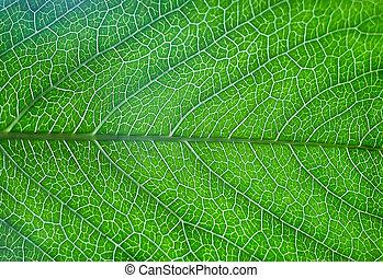 緑の葉, の, 木, ∥で∥, 筋
