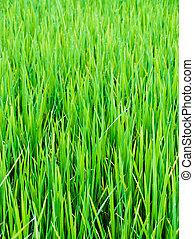 緑の葉, の, 農場