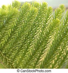緑の葉, クローズアップ