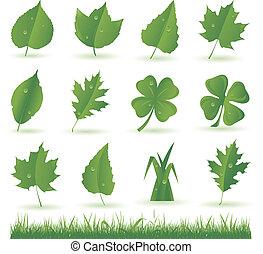 緑の葉, コレクション